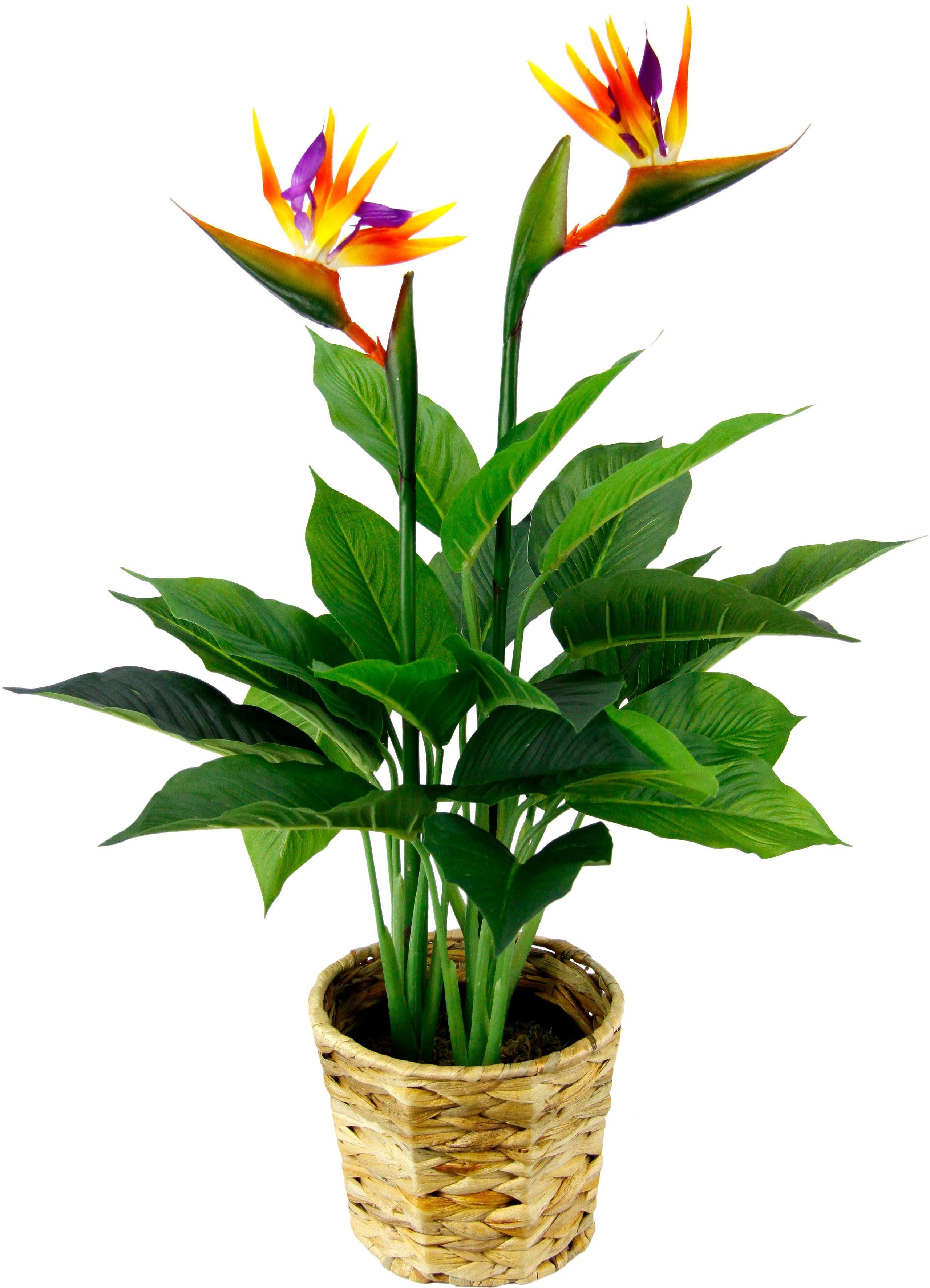 Kunstpflanze »Strelitzienpflanze in Wasserhyazinthentopf«