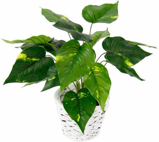 Kunstpflanze »Pothospflanze in Wasserhyazinthentopf« Pothospflanze, I.GE.A., Höhe 37 cm