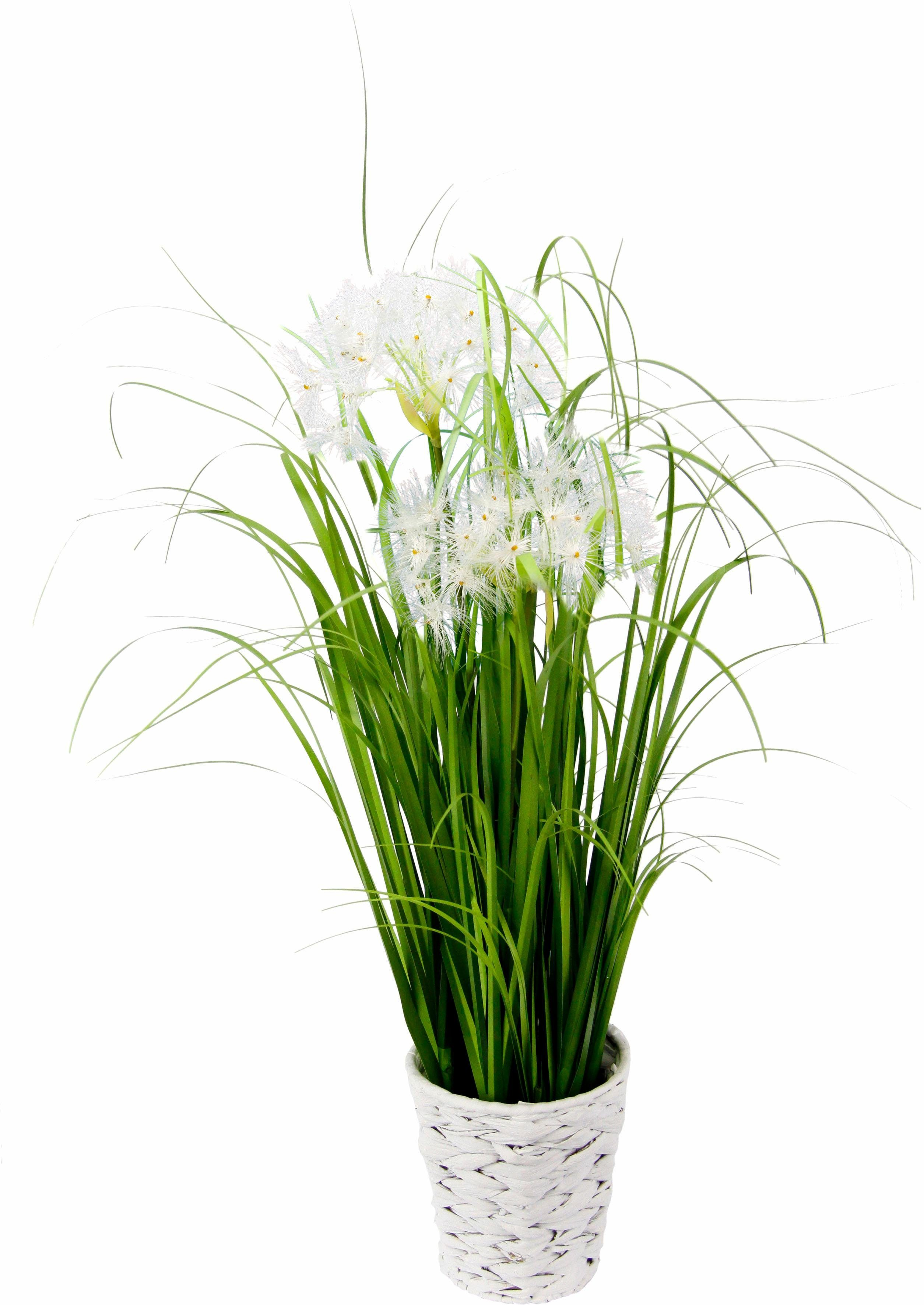 Kunstpflanze »Pusteblumegras in Wasserhyazinthentopf«