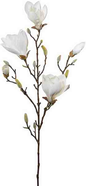 Magnolie 97 cm