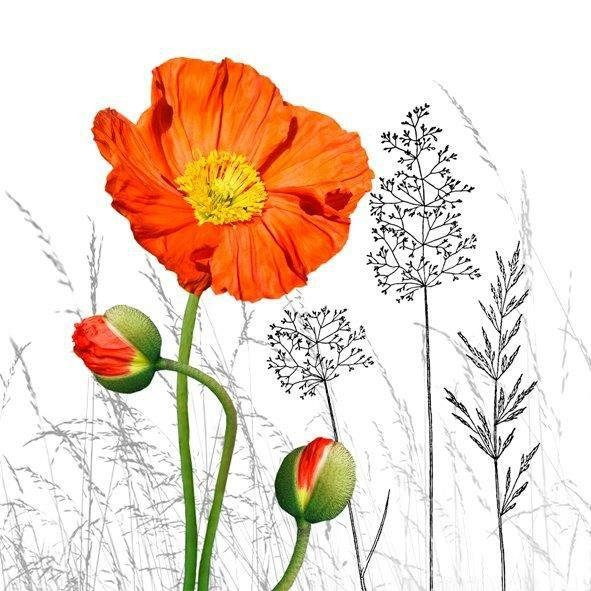 Serviette ´´Orange Poppy´´