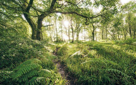 Komar Vlies Fototapete »Mystic Path« 400/250 cm