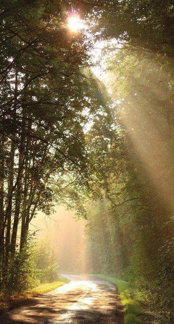 Fototapete Rasch  Sonnenstrahlen bunt,mehrfarbig | 04000441848809