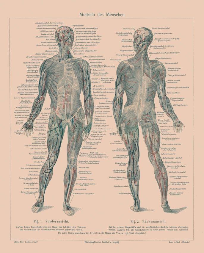 Fototapete, Rasch, »Menschlicher Körper« kaufen | OTTO