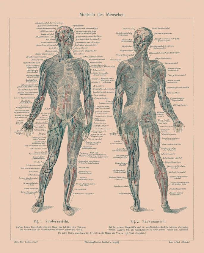 Fototapete, Rasch, »Menschlicher Körper«