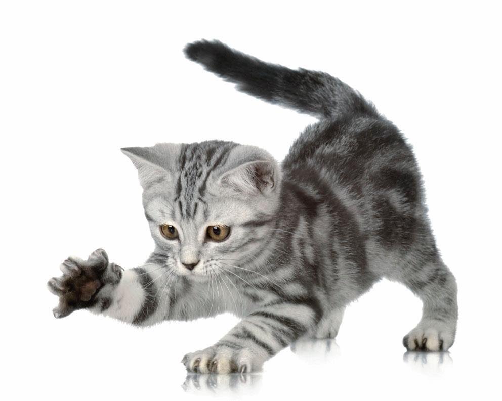 Fototapete, Rasch, »Katze« - broschei