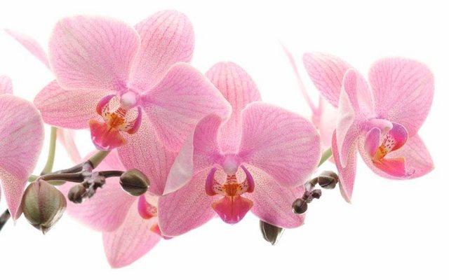 Fototapete Rasch  Orchidee bunt,mehrfarbig | 04000441838350