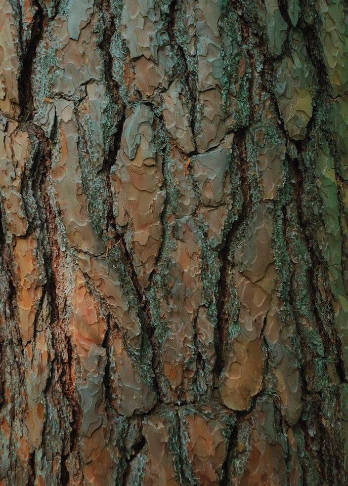 Außergewöhnlich Fototapete »Baumstamm«, mehrfarbig, FSC®, RAL-Gütezeichen online #MS_14