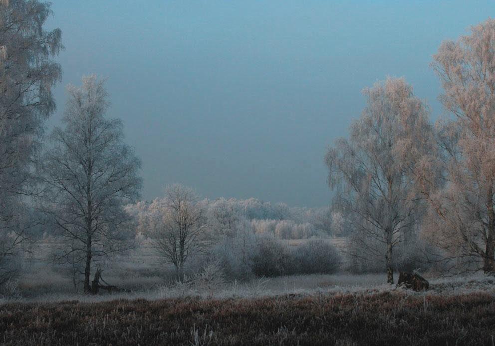 Fototapete, Rasch, »Winterwald«