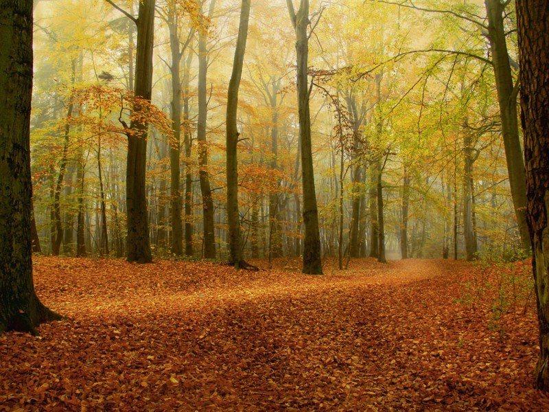 Artland Poster, Leinwandbild »Herbstwald Landschaften Wald Herbst Bäume Foto« | Dekoration > Bilder und Rahmen > Poster | Kiefernholz | Artland