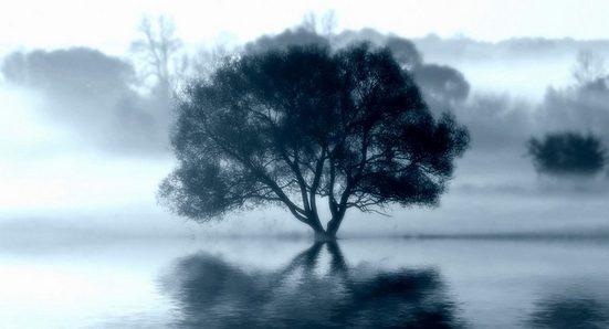 Leinwandbild »Sprint Tree«, 130/70 cm