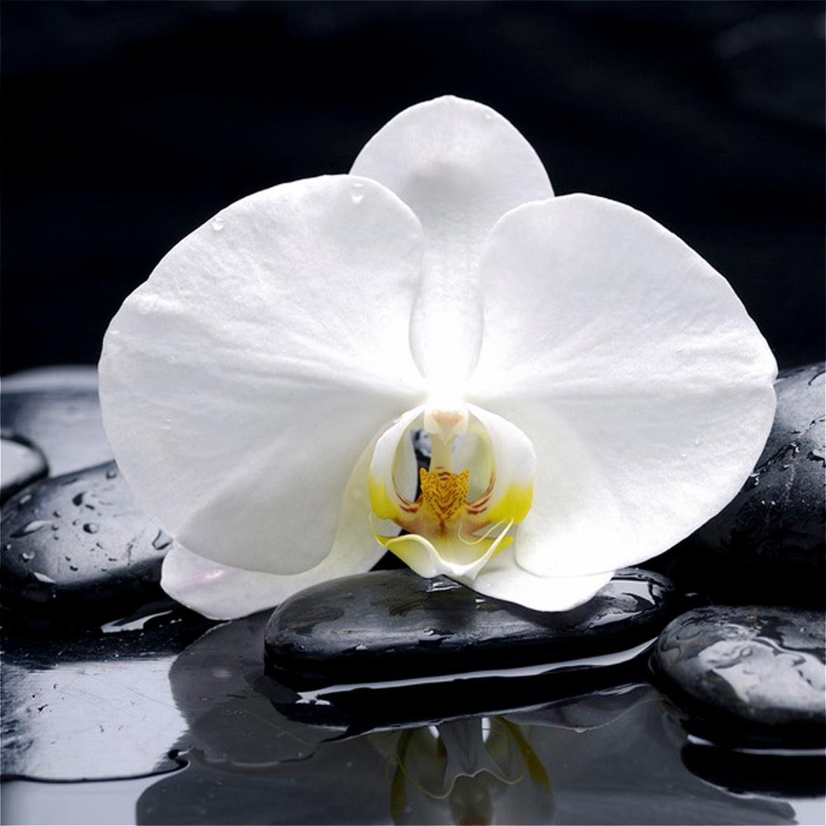 Leinwandbild »Bloom« 40/40 cm,