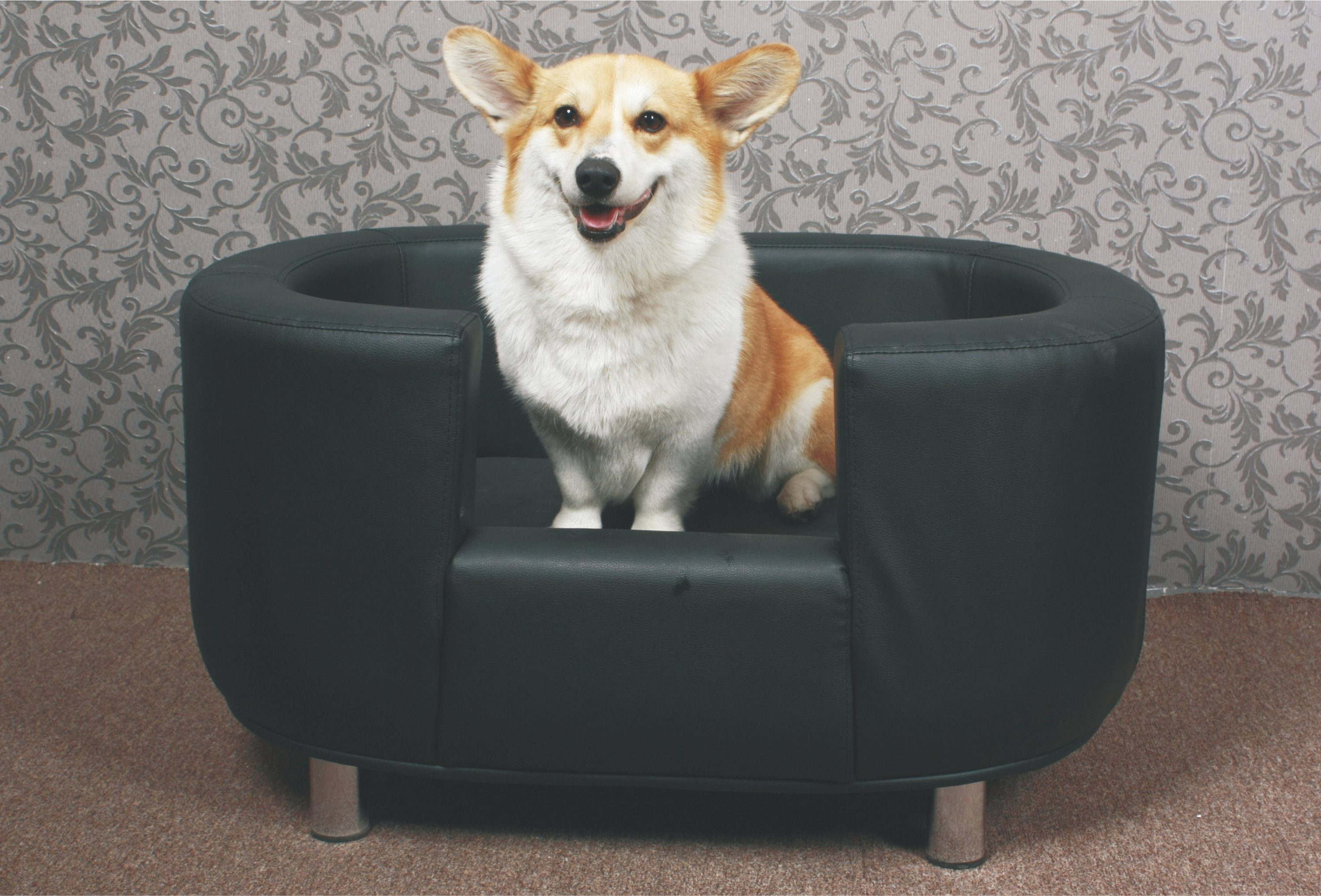 HTI-Line Hundesofa »Willy«