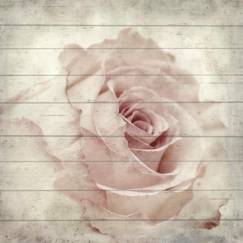 Home affaire Holzbild »Rose seitliche«, Blume, 40/40 cm