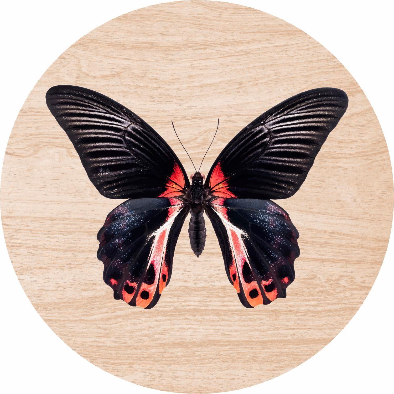 Home affaire Holzbild rund »Schmetterling« 30/30 cm