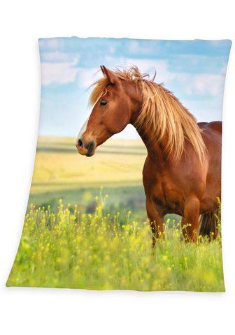 HERDING YOUNG COLLECTION Vaikiškas užklotas »Pferd«