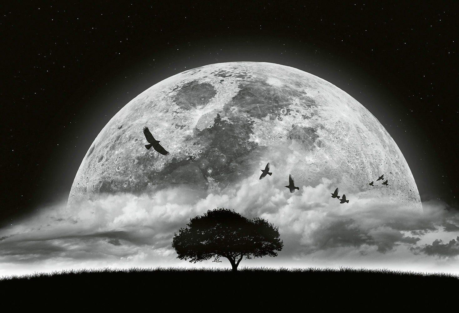 IDEALDECOR Fototapete »Moon and Birds«