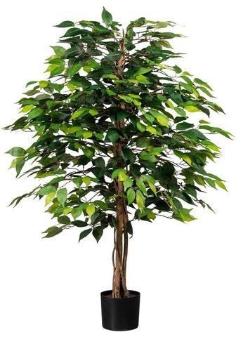 Creativ green Kunstpflanze »Ficus Benjamini« aukštis...