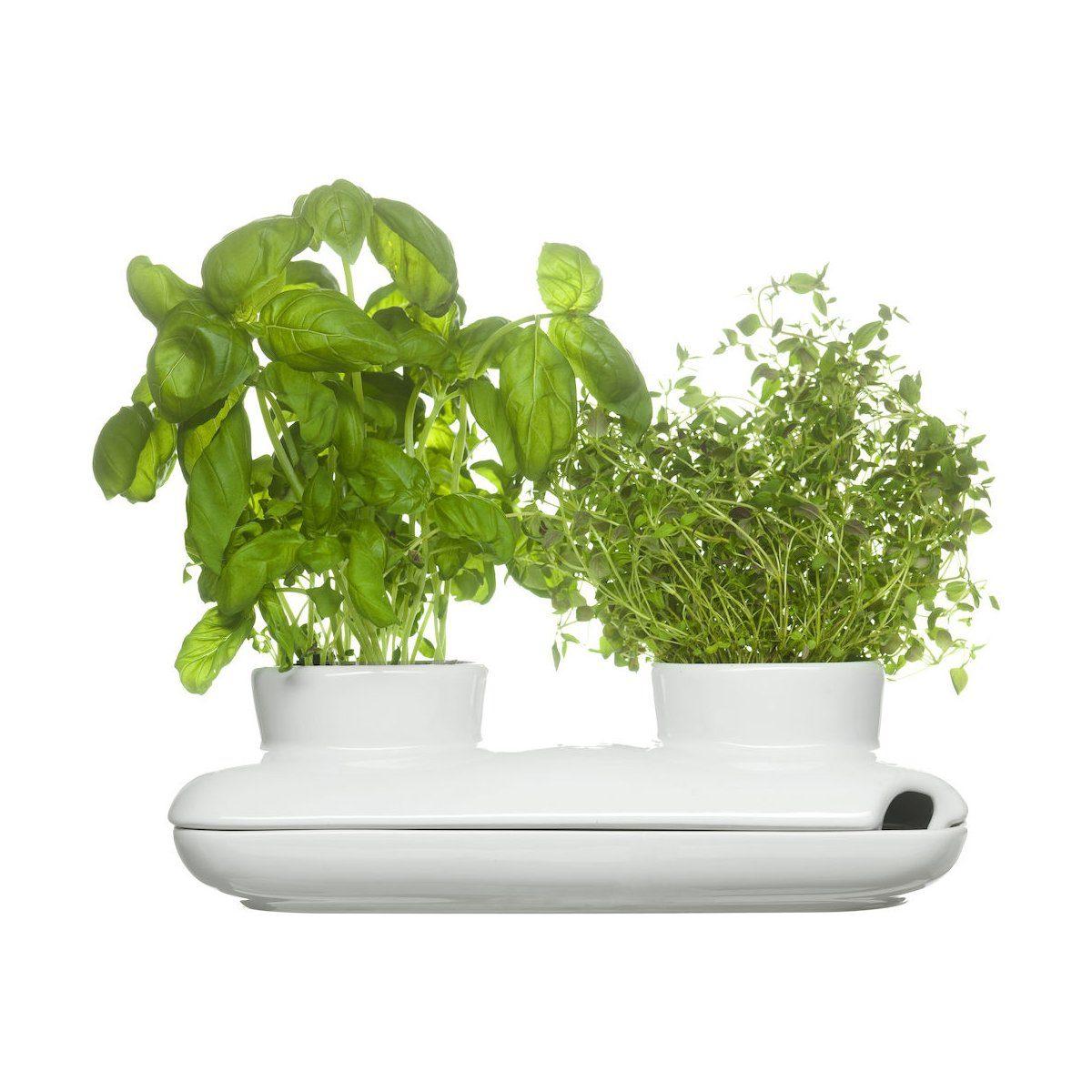 Sagaform Sagaform Kräutertopf Herbs&Spices, Duo