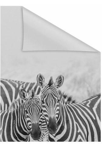 LICHTBLICK Dekoratyvinė plėvelė langui »Zebra« bl...