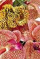 Home affaire Kunstpflanze »Orchidee«, Bild 5