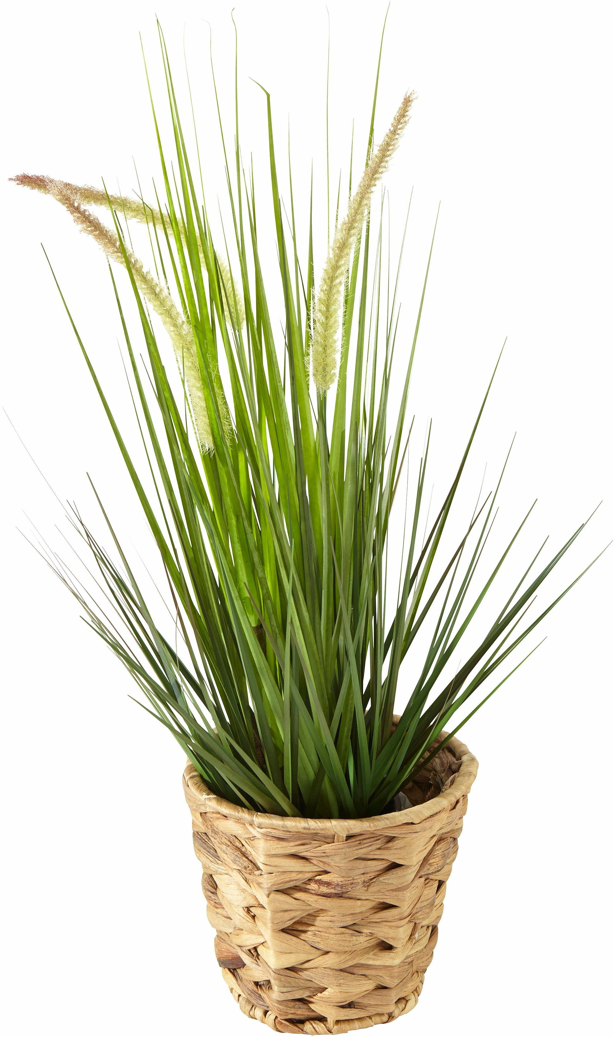 Home affaire Kunstpflanze »Gras« im Kunststofftopf