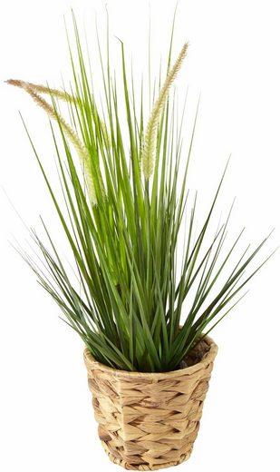 Home affaire Kunstpflanze »Gras«