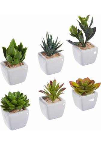 Dirbtinis augalas (Rinkinys 6 vienetai...