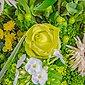 FLOWRFRAME Blumenstrauß, mit 37 bunten gemischten Blumen ohne Vase, Bild 6