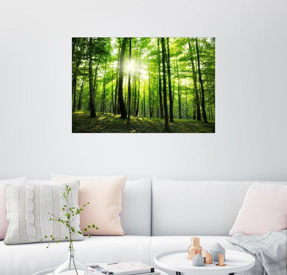 Posterlounge Wandbild »Sonnenlicht Im Grünen Wald