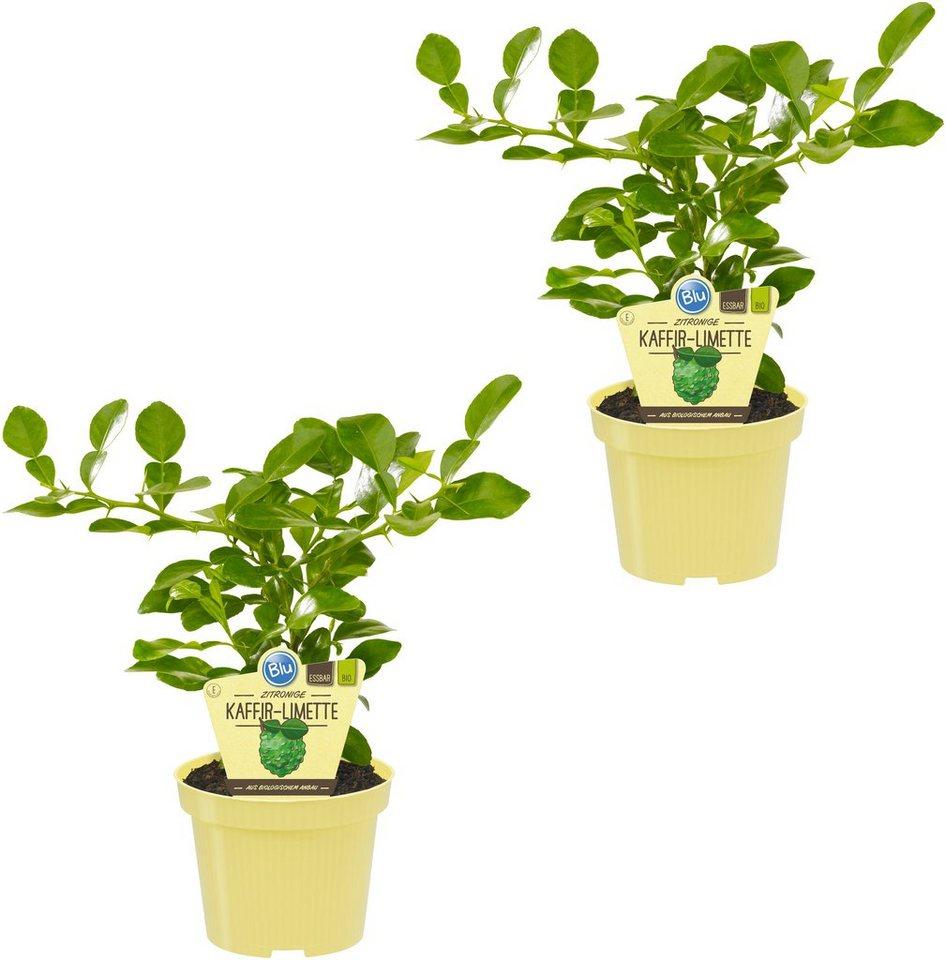 zimmerpflanzen auf rechnung designer sonnenbrillen auf. Black Bedroom Furniture Sets. Home Design Ideas