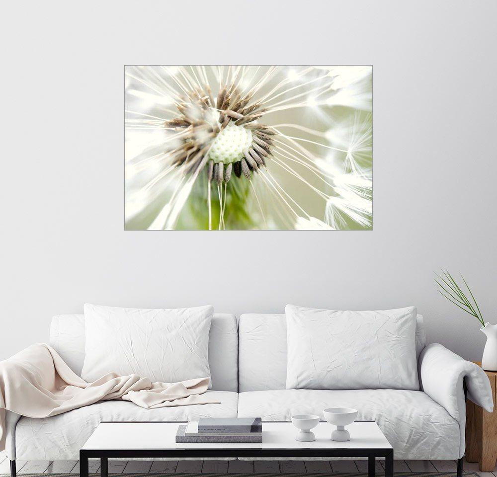 Posterlounge Wandbild - Falko Follert »Pusteblume 16« | Dekoration > Bilder und Rahmen > Bilder | Holz | Posterlounge
