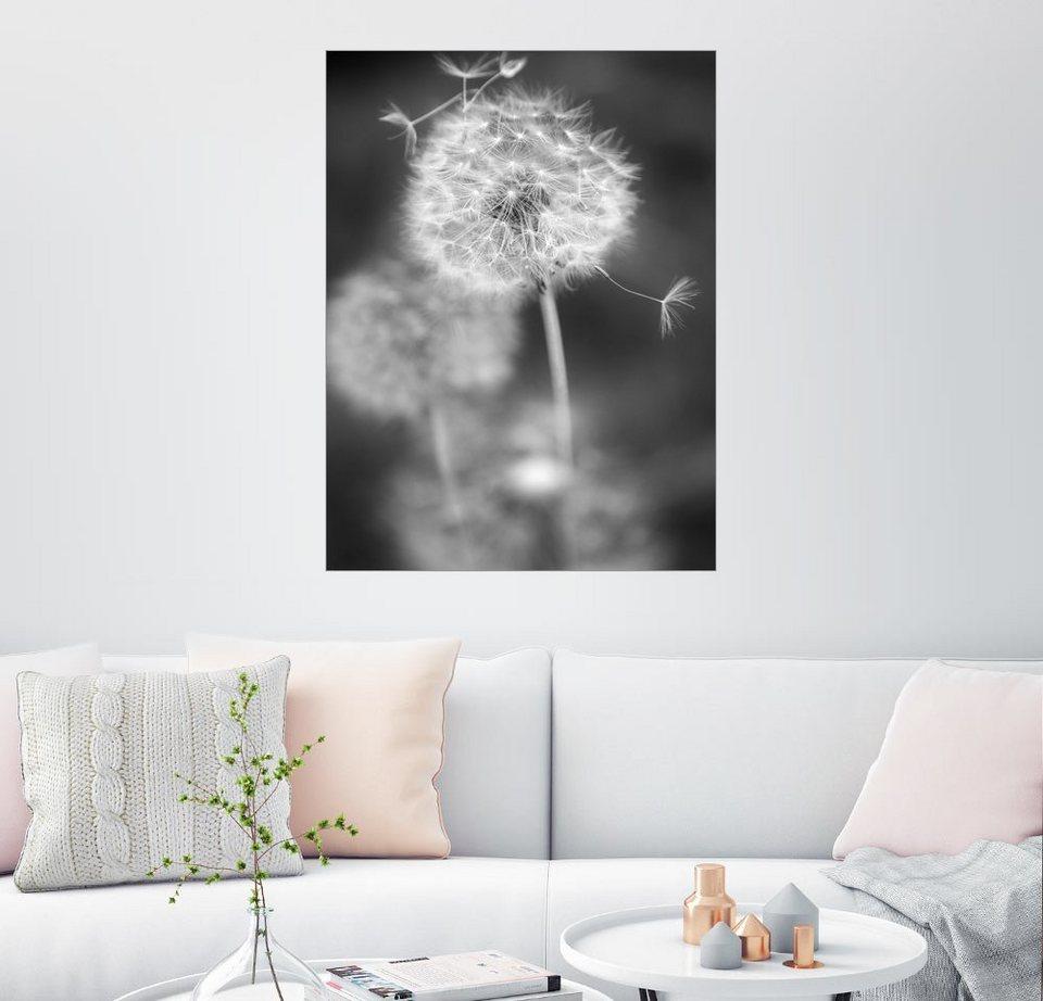 posterlounge wandbild julia delgado pusteblume schwarzwei online kaufen otto. Black Bedroom Furniture Sets. Home Design Ideas