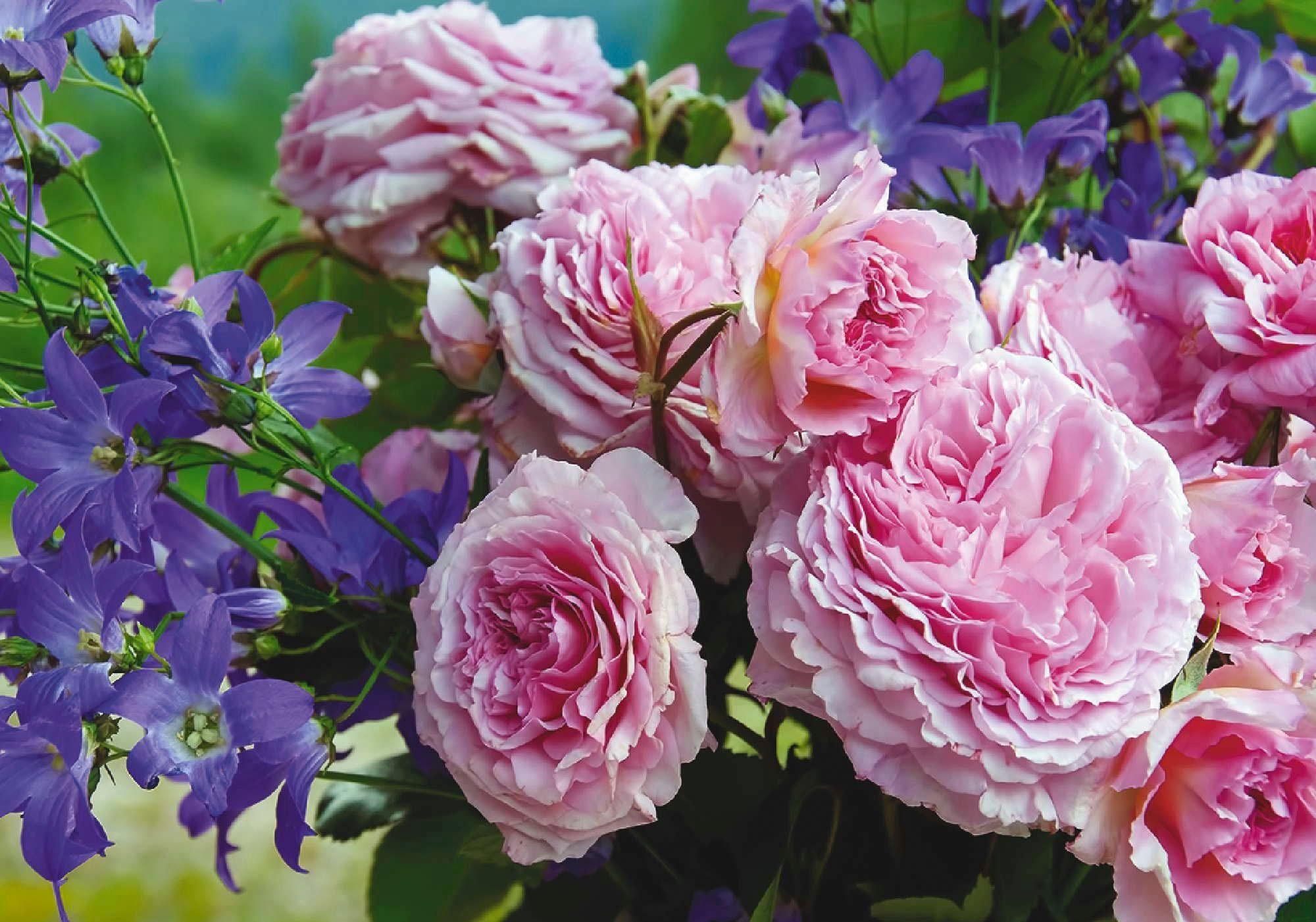Home affaire Leinwandbild »Bouquet aus Rosen und Glockenblumen«, 100/70 cm