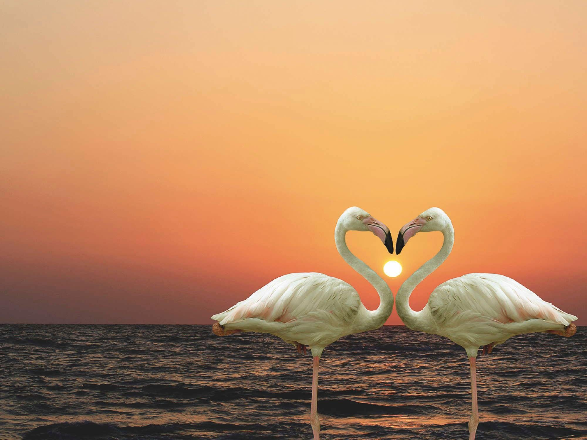 Home affaire Leinwandbild »Flamingo-Paar - am Abend am Strand«, 80/60 cm