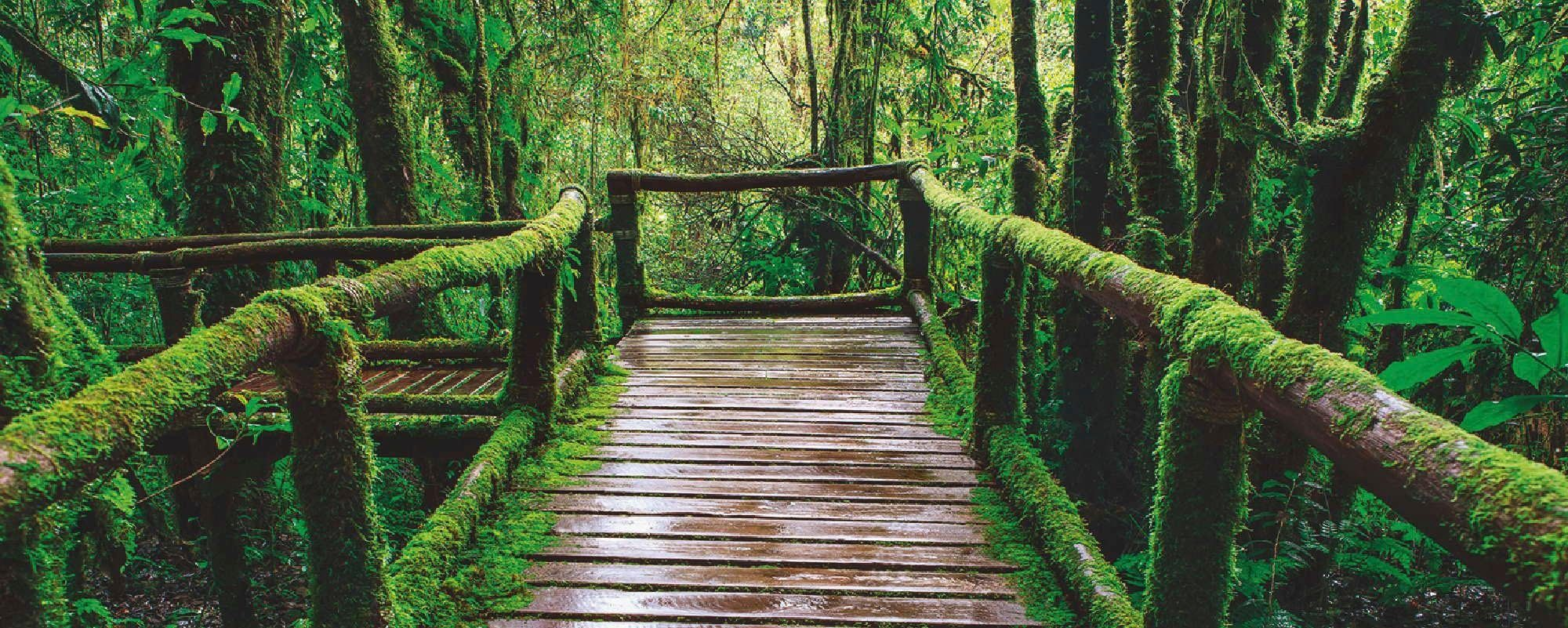 Home affaire Glasbild »khunaspix: Hölzerner Brückenpfad im Wald, Thailand«, Wald, 125/50 cm