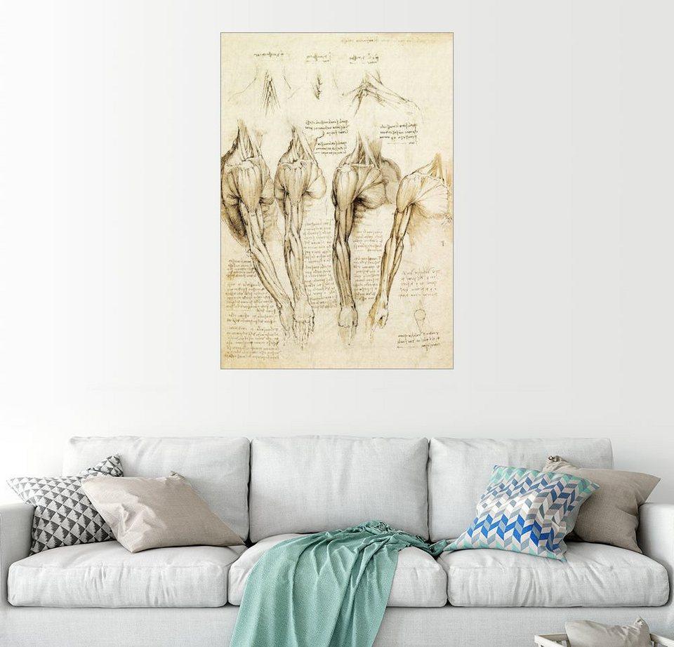 Posterlounge Wandbild - Leonardo da Vinci »Muskeln von Schulter, Arm ...