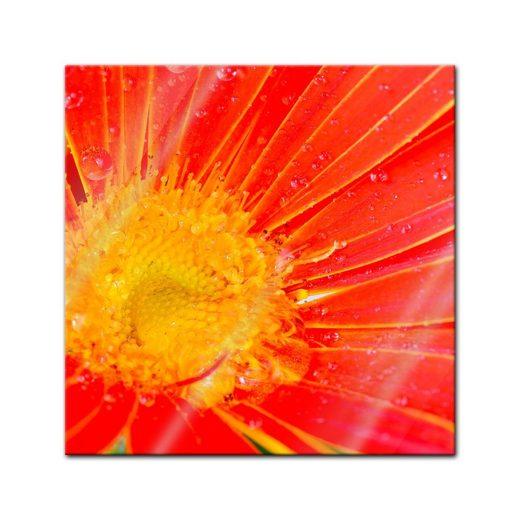 Bilderdepot24 Glasbild, Glasbild - orangefarbige Gerbera