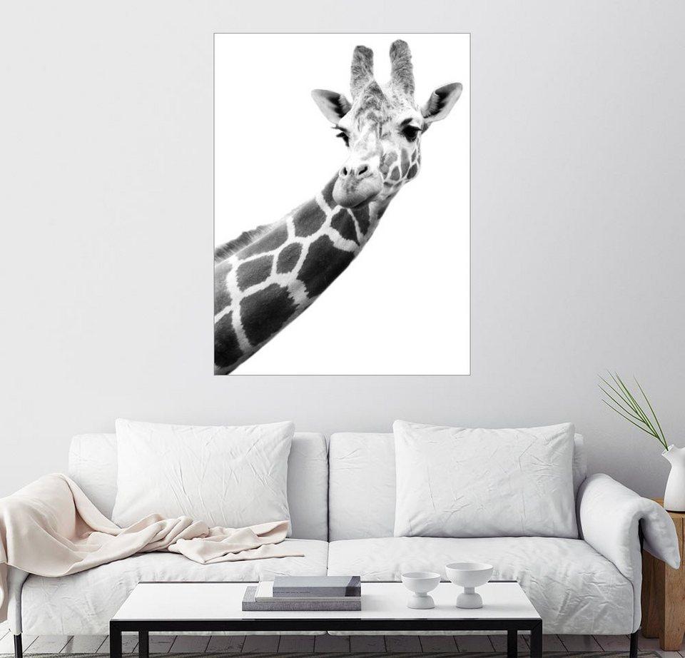 posterlounge wandbild darren greenwood giraffe in schwarz weiss online kaufen otto. Black Bedroom Furniture Sets. Home Design Ideas
