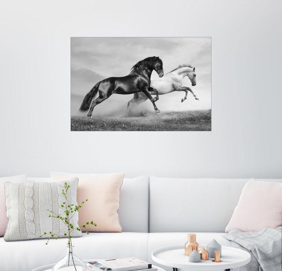 posterlounge wandbild pferde schwarz wei kaufen otto. Black Bedroom Furniture Sets. Home Design Ideas