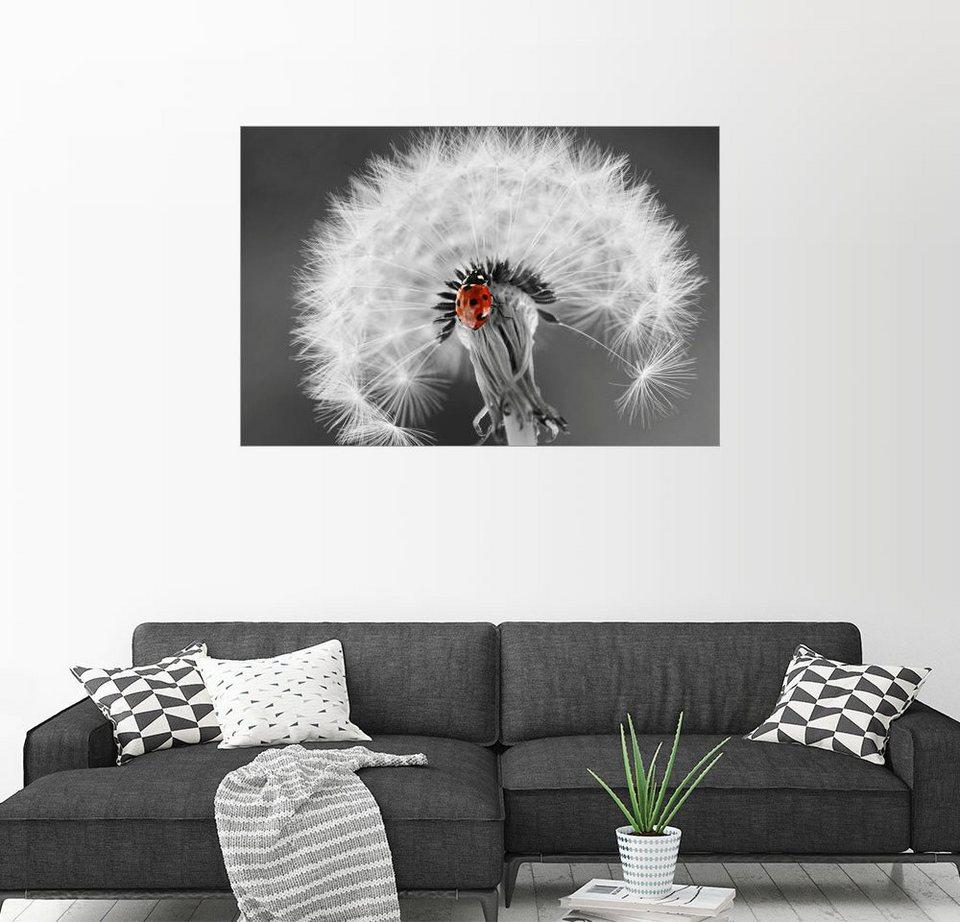 posterlounge wandbild heike hultsch marienk fer auf. Black Bedroom Furniture Sets. Home Design Ideas