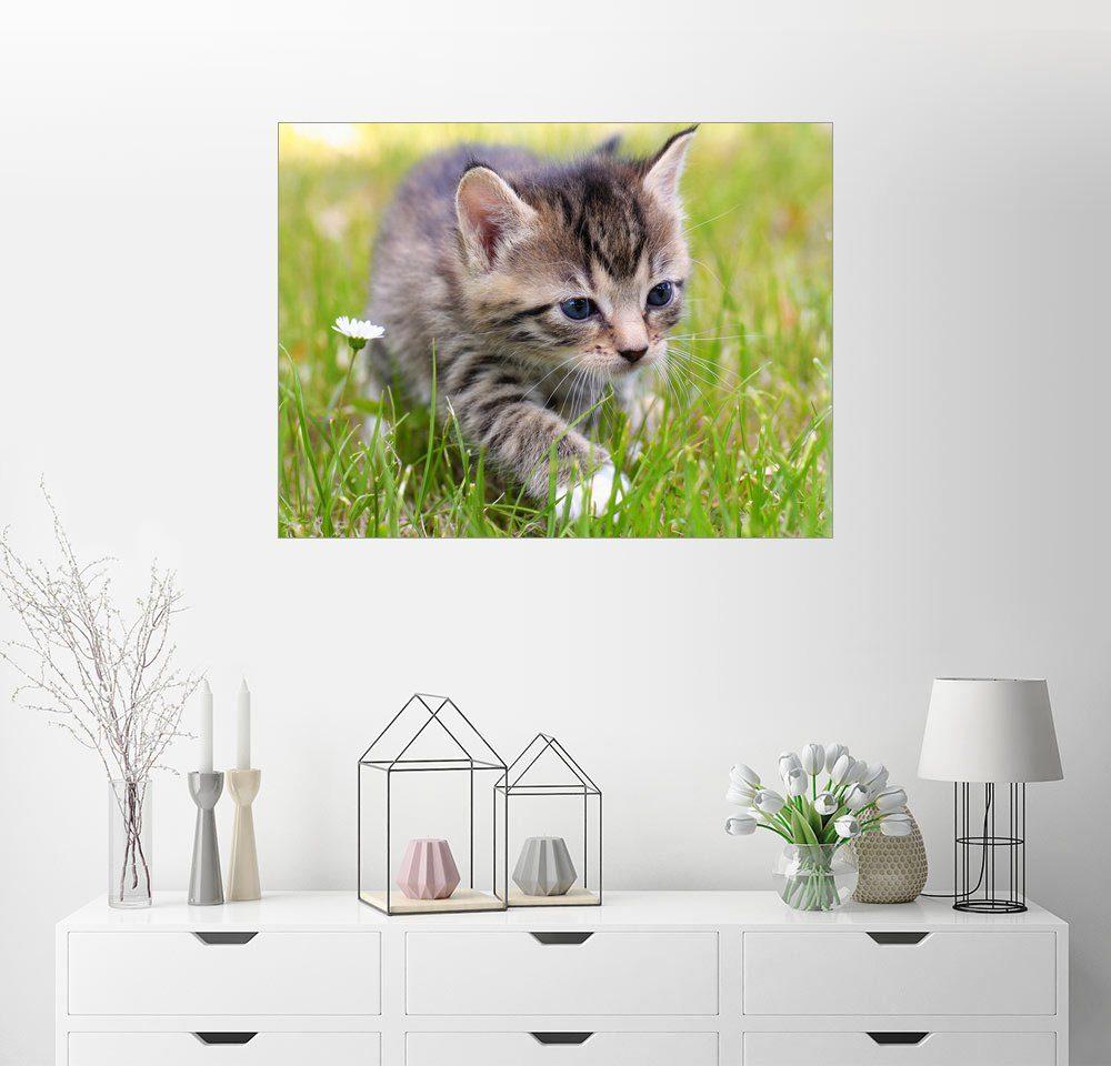 Posterlounge Wandbild - Falko Follert »Katze«