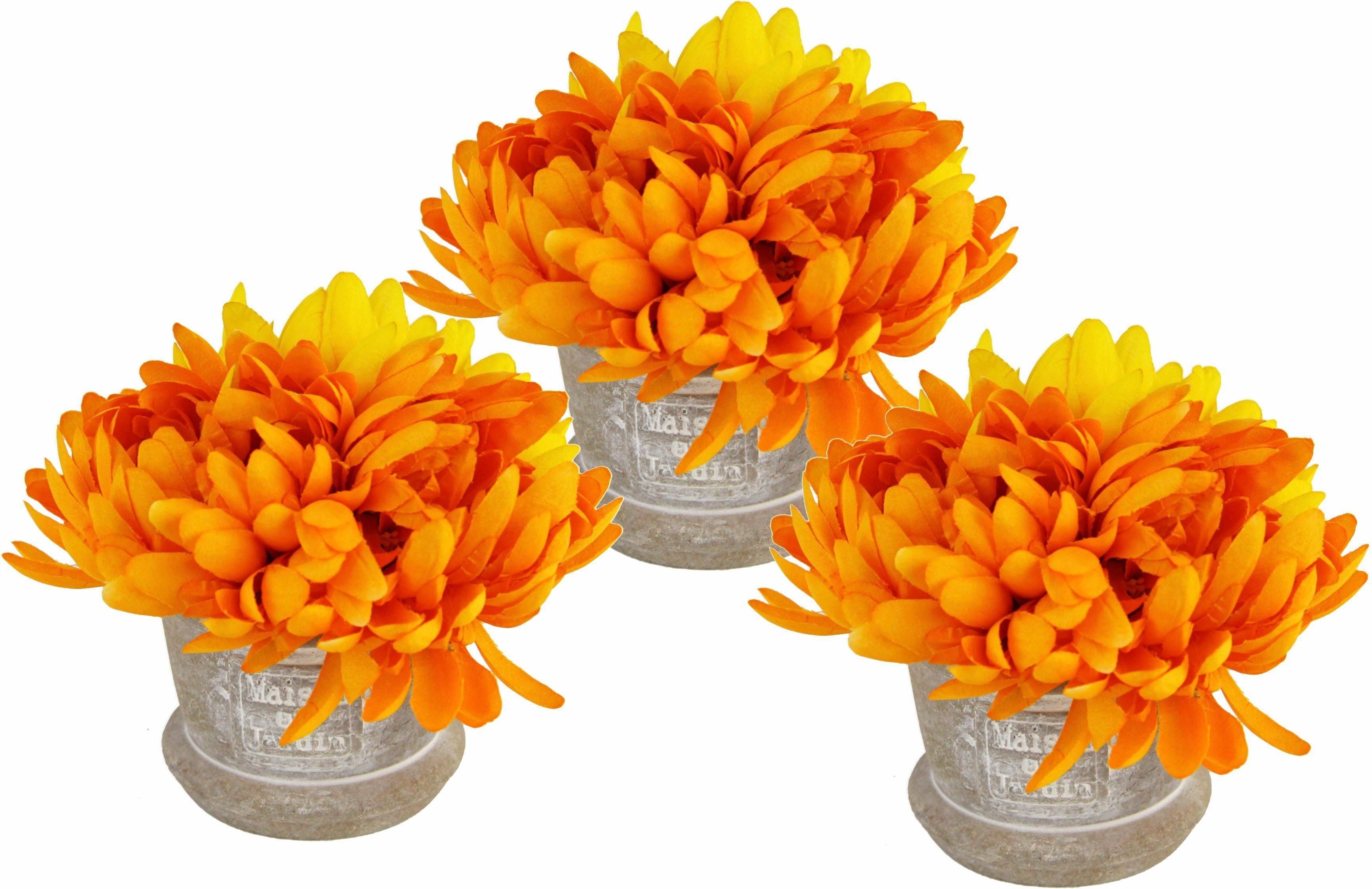 Chrysantheme i.T. 3er Set 12cm