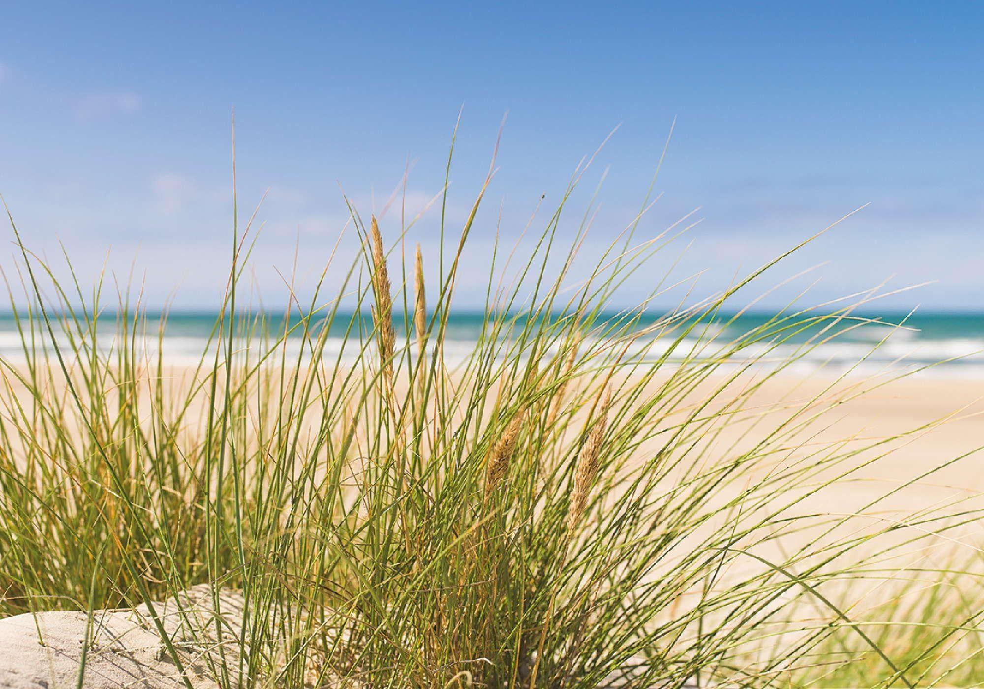 Home affaire Leinwandbild »Oliver: Strand mit Dünengras im Sand«, 70/50 cm