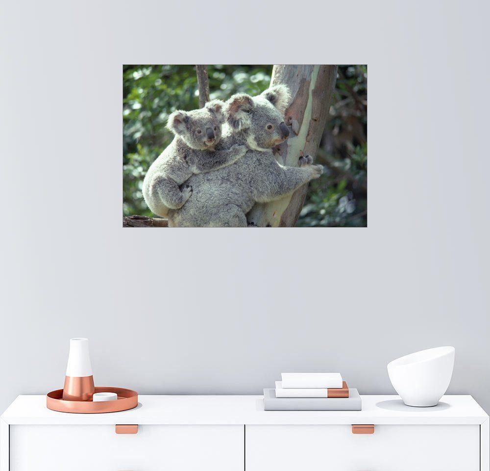 Posterlounge Wandbild - Anne Keiser »Koala Schutzgebiet«