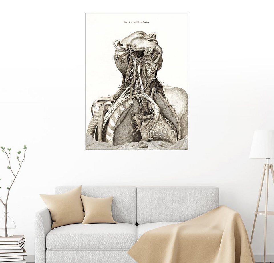 Posterlounge Wandbild »Anatomie des Nervensystems im Herzen, Hals un ...