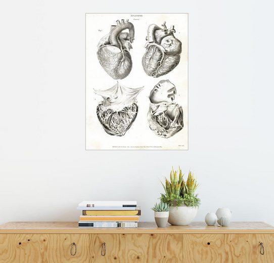 Posterlounge Wandbild - Thomas Milton »Anatomie des menschlichen Herzens«