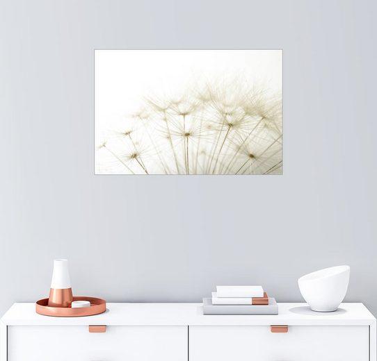 Posterlounge Wandbild »flauschige Pusteblume«