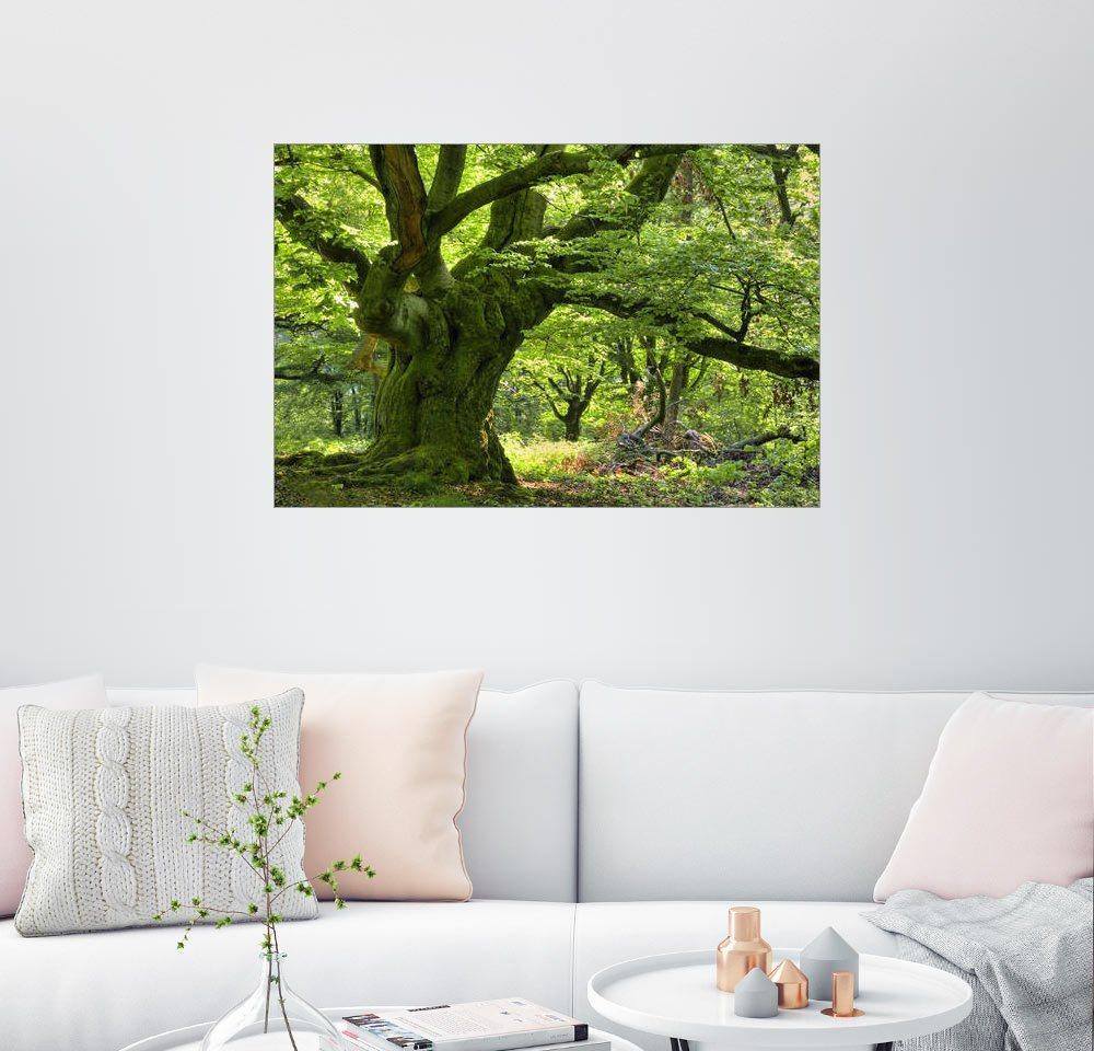 Posterlounge Wandbild - Bieberchen »Baumriese« | Dekoration > Bilder und Rahmen > Bilder | Holz | Posterlounge