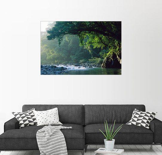 Posterlounge Wandbild - Tim Laman »Ein Fluss im Regenwald«